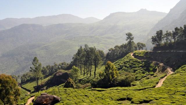 Munnar et la vallée de thé
