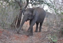 Mudumalai, où le livre de la jungle