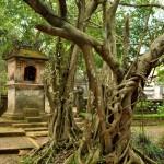 La pagode de la jungle