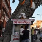 Un temple dans un arbre et les pujas